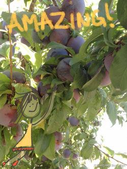 2014-07-31-peaches3.jpg