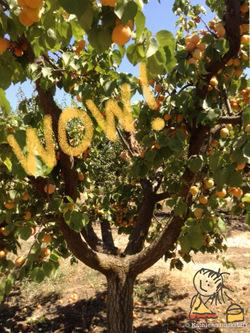 2014-07-31-peaches4.jpg