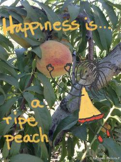2014-07-31-peaches6.jpg