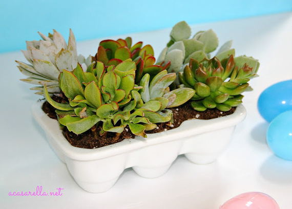2014-08-01-Succulentsinporcelaineggcarton.jpg