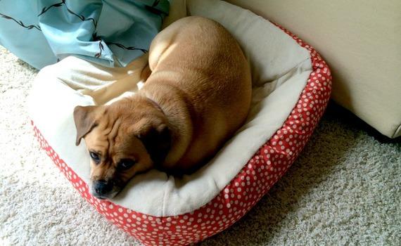 2014-08-01-dogbed.jpg