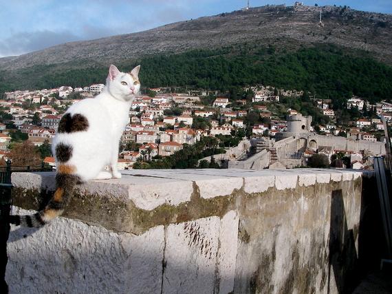 2014-08-03-cat.jpg