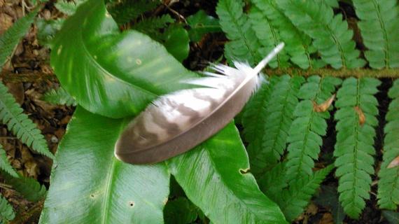2014-08-03-featheronbracken.jpg