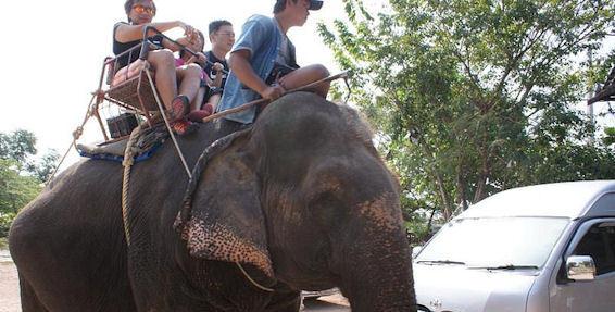 2014-08-04-Elephant1.jpg