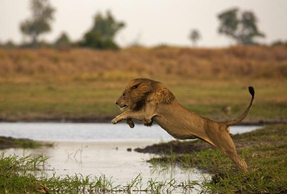 2014-08-05-Duba_Botswana_by_Beverly_Joubert.jpg