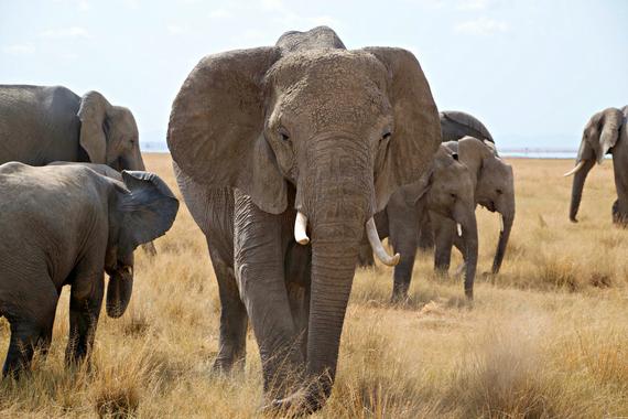2014-08-06-elephants.jpg.jpg