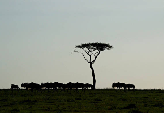 2014-08-06-wildebeestmigration.jpg.jpg