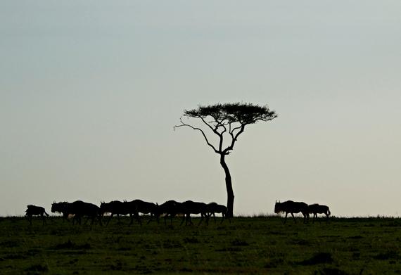 2014-08-06-wildebeestmigration.jpg.jpg