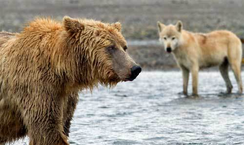 2014-08-07-Bears2.jpg