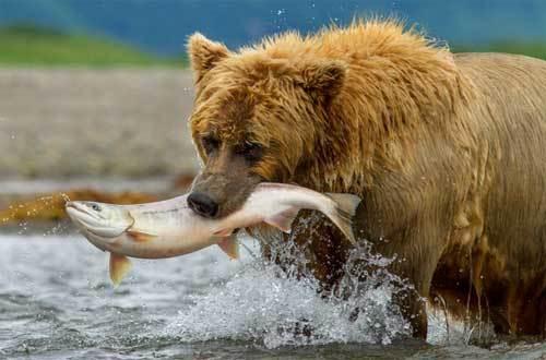 2014-08-07-Bears4.jpg