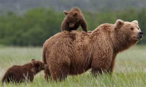 2014-08-07-Bears6.jpg