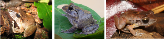 2014-08-07-frogs3.PNG