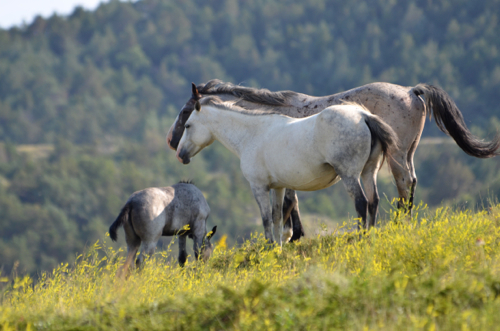 2014-08-07-huff_horse.jpg
