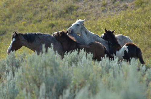 2014-08-07-huff_horses_two.jpg