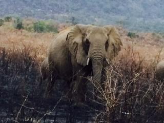 2014-08-08-elephant.jpeg