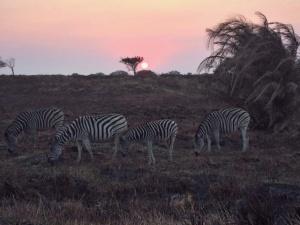 2014-08-08-zebra.jpg