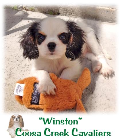2014-08-12-Winston.jpg