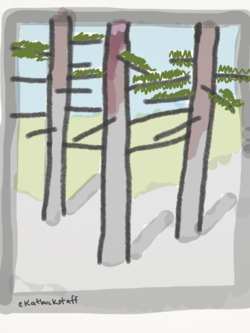 2014-08-12-forest2.png