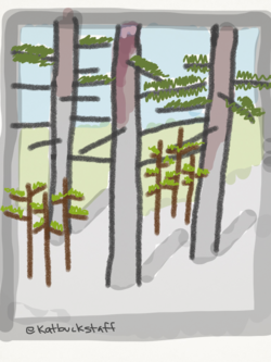 2014-08-12-forest3.png