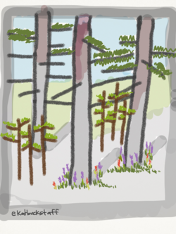 2014-08-12-forest4.png