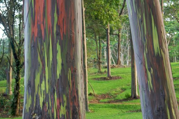2014-08-14-arboretum.jpg
