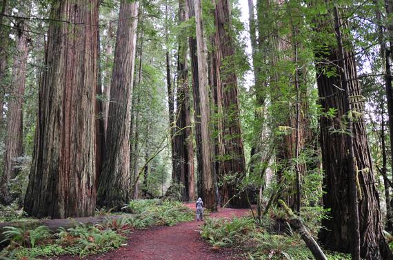 2014-08-14-redwoods.jpg