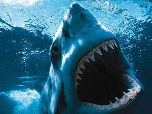 2014-08-15-shark.jpg