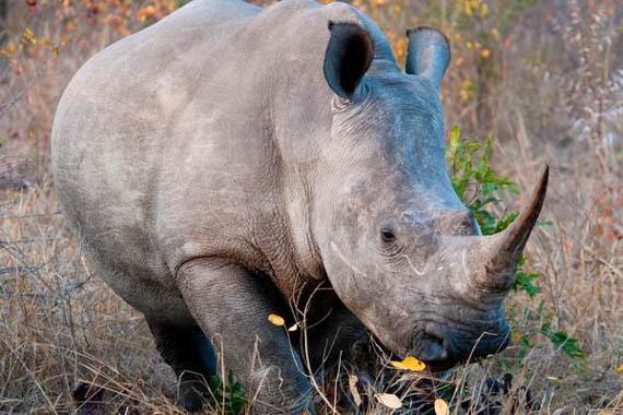 2014-08-18-rhinocRodMast.jpg