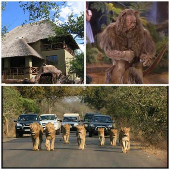 2014-08-20-Lion.collage.jpg