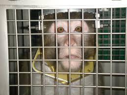 2014-08-24-monkeyexperiment.jpg