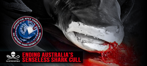 2014-08-25-OperationApexHarmonySeaShepherdAustraliaEarthDrReeseHalter