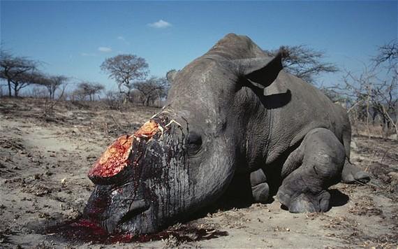 2014 08 25 RhinoPoachingEarthDrReeseHalter