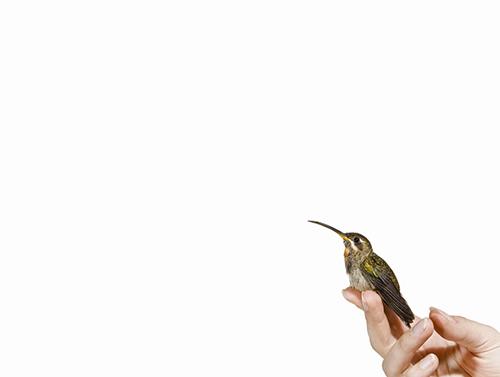 2014-08-25-cmrubinworldhummingbirdsanna3500.jpg