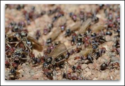 2014-08-26-ants.jpg