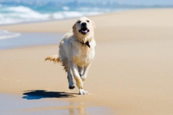 2014-08-30-beachrun.2.jpg