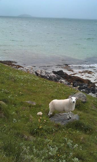 2014-08-31-sheeponeriskay.jpg