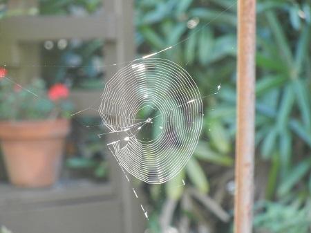 2014-08-31-spiderweb.jpg