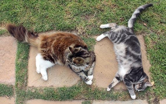2014-09-02-kitties.jpg