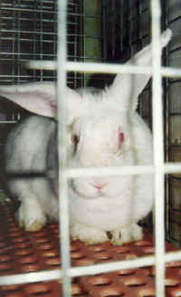 2014-09-02-rabbit30_small.jpg