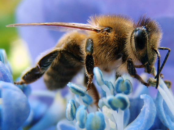 2014-09-03-HoneybeeEarthDrReeseHalter18