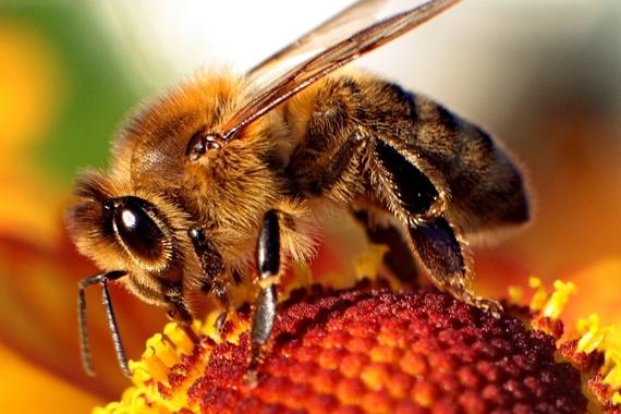 2014-09-03-HoneybeeEarthDrReeseHalter36