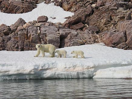 2014-09-03-polarbear.jpg