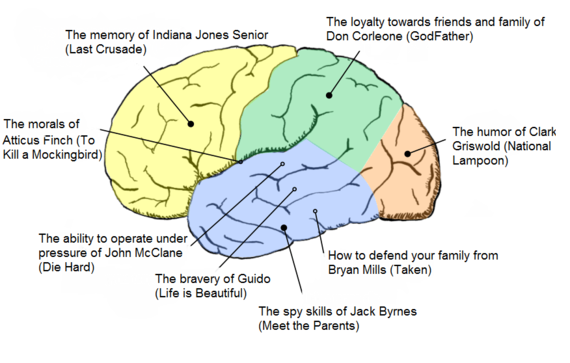 business plan main sections of the brain
