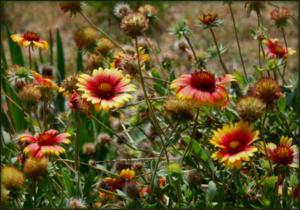 2014-09-05-Flowersatcrashsite.png