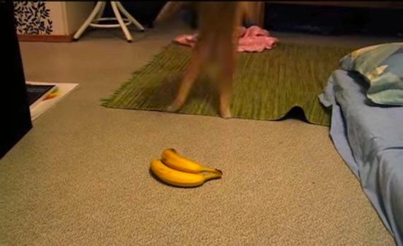bananavsjumpcat01