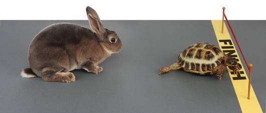 2014-09-09-Hare_Turtle.jpg