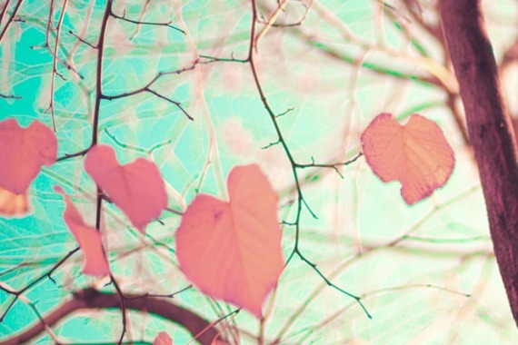 2014-09-09-fallfresh.jpg