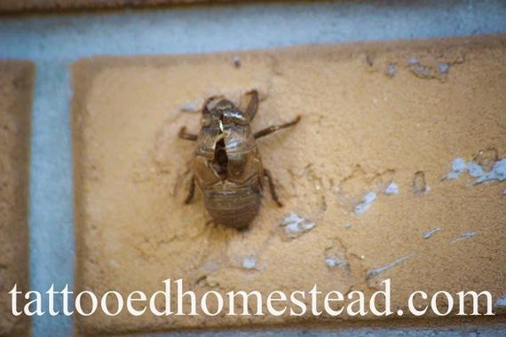 2014-09-10-cicada1.jpg