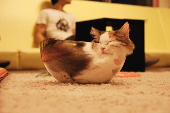 catbowl01