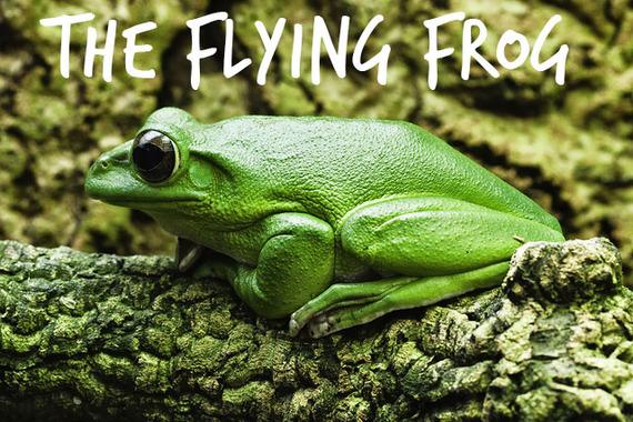 2014-09-12-Theflyingfrog.jpg